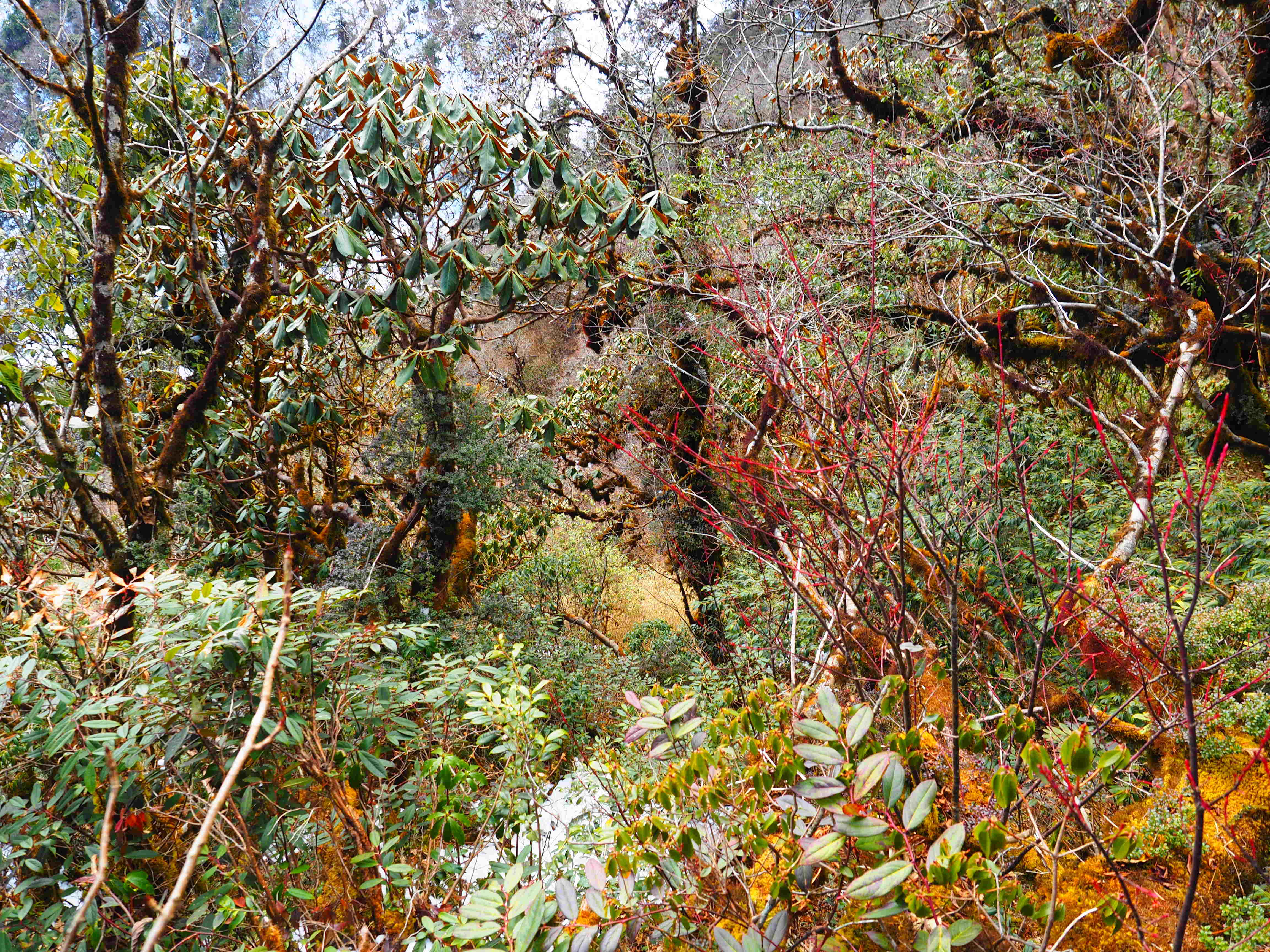 temperate rainforest at 3000 m asl in winter